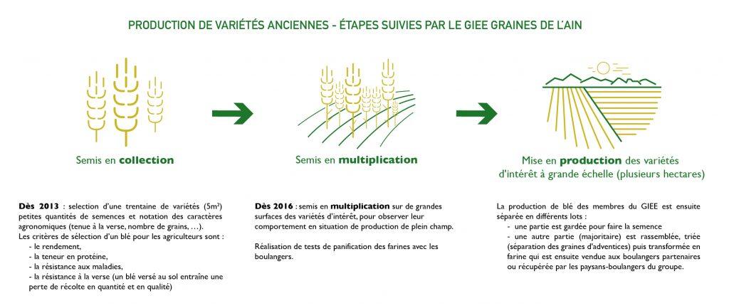 giee-graines-de-l-ain-etapes-de-selection