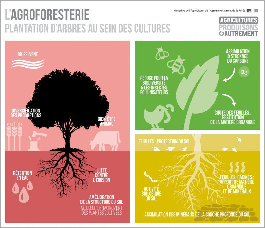 agroforesterie-schema-de-fonctionnement-avantages