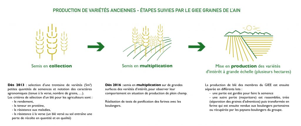 giee-graines-de-l-ain-etapes-de-selection