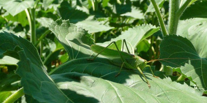 Agroecologie-biodiversite-cda-production-vegetale