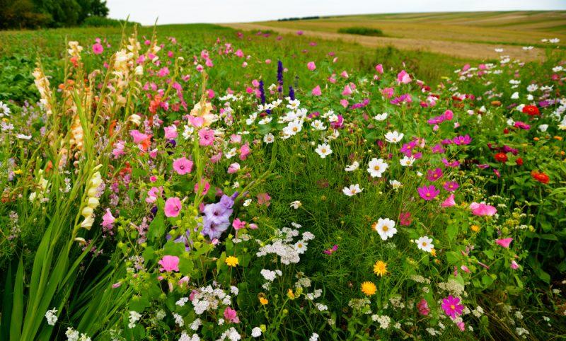 agro-ecologie-cda-biodiversite