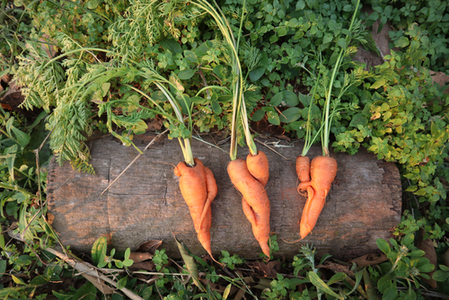 agroecologie-definition-permaculture