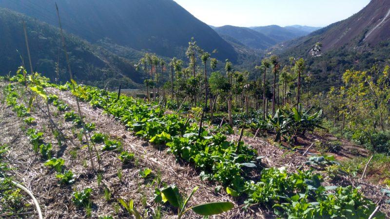 agroforesterie-conservation-des-sols-cda