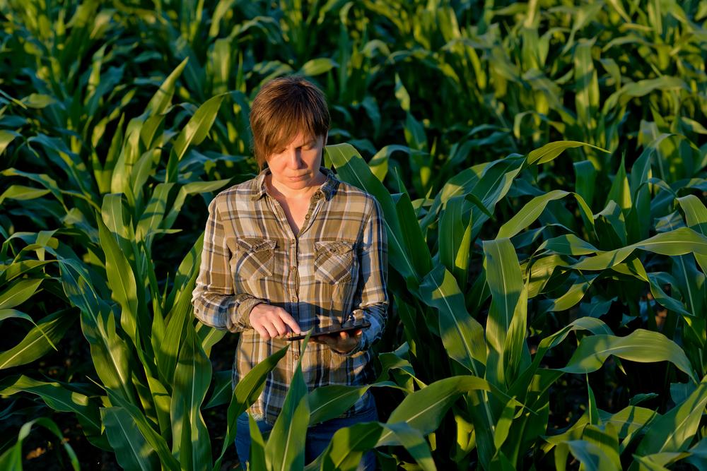 fair agriculture