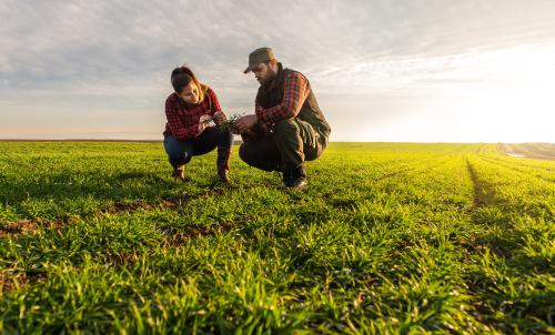 agricole-milieu-de-vie-du-ver-de-terre