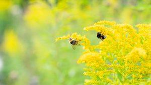 bioindicateur-abeilles-qualité-flore
