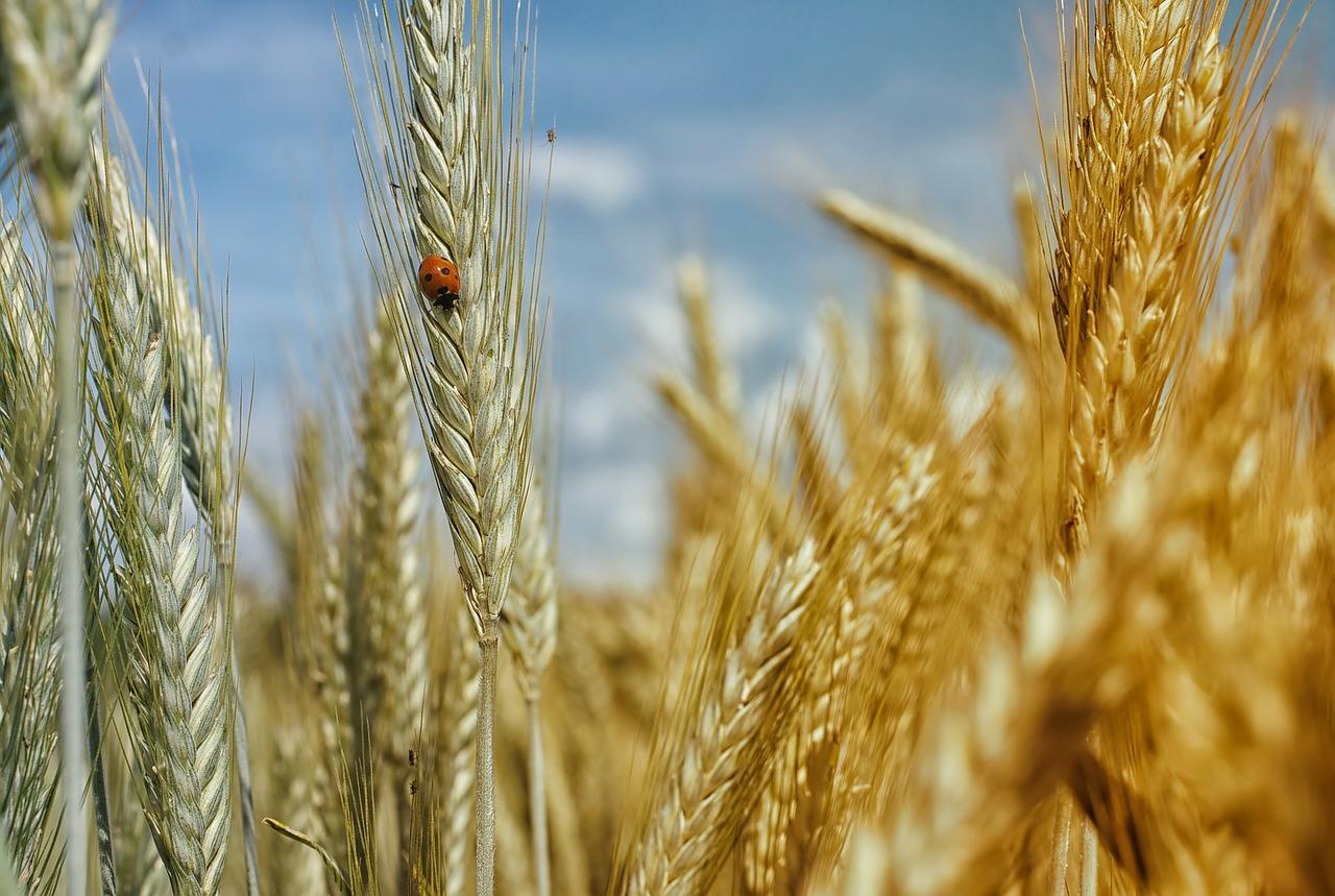 L'agroécologie Au Service Du Maintien De La Diversité Alimentaire