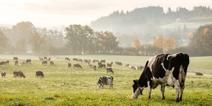 L'élevage En Agroécologie : Une Production Animalière Plus Durable ?