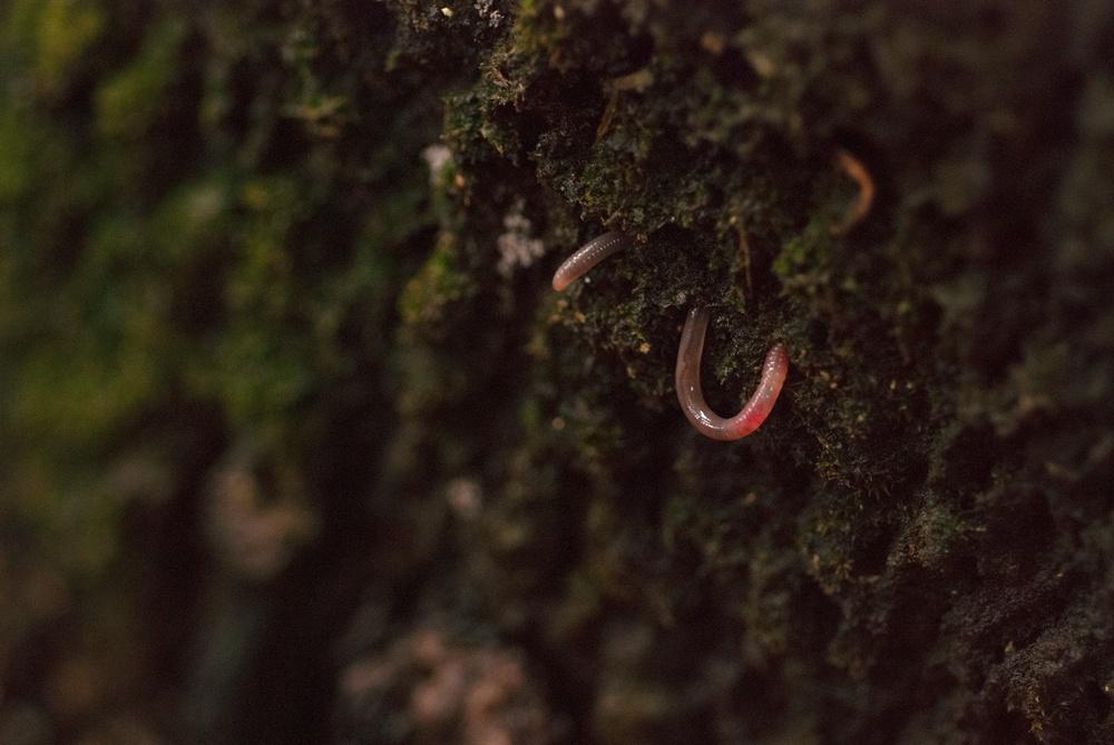 maraichage-sol-vivant-agroecologie