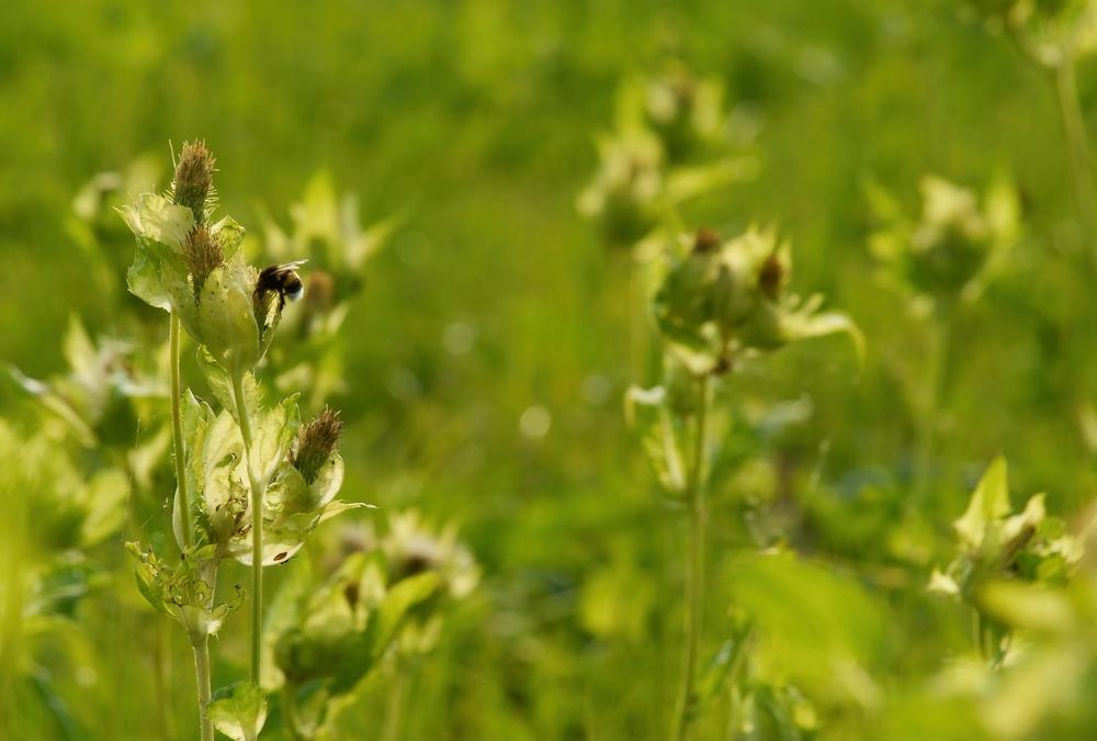 Les Plantes Bioindicatrices : Comment S'en Servir Pour Caractériser Un Milieu ?