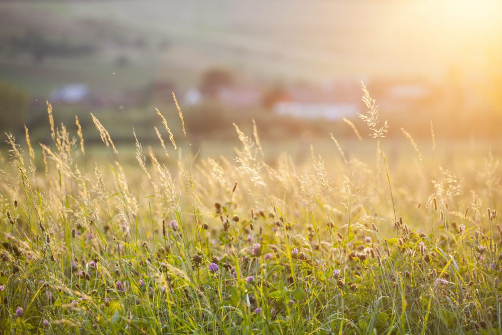 La Prairie Permanente : Un Patrimoine Au Cœur Des Pratiques Agroécologiques