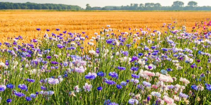 Agro-ecologie-biodiversité-production-vegetale