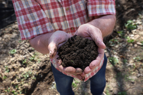 Market Gardening On Living Soil: A System Where Nitrogen Is No Longer The Limiting Element
