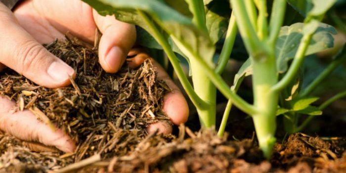 Agroécologie