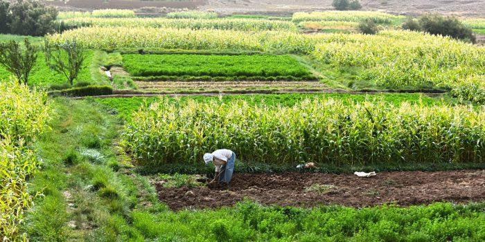 La Résilience Des Systèmes Agricoles : Pour Une Production Agricole Durable ?