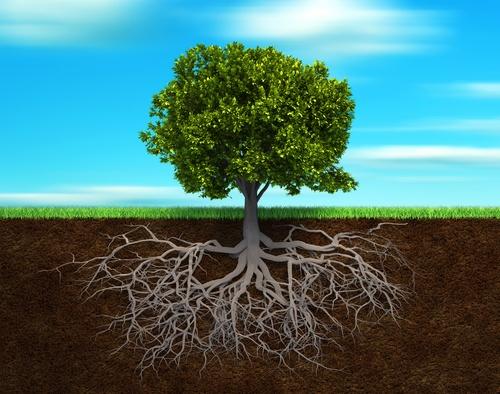 symbiose-arbre-sol-vivant-agroecologie