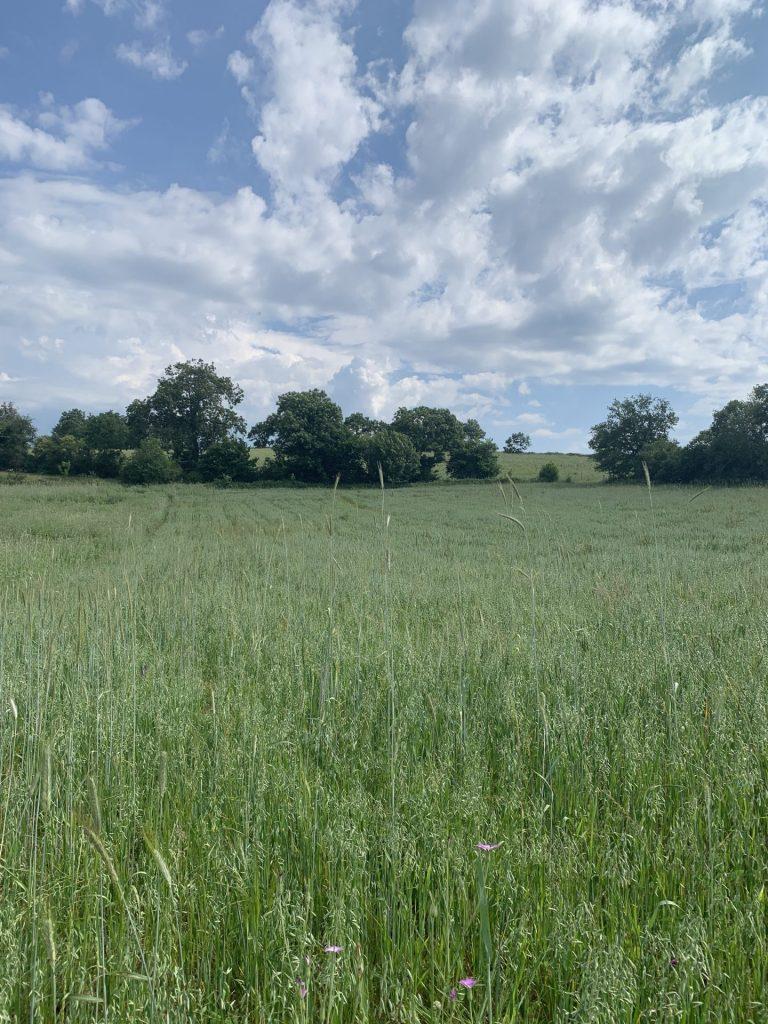 visits-to-pilot-farms